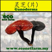 ECO Ganoderma (slice) 灵芝片